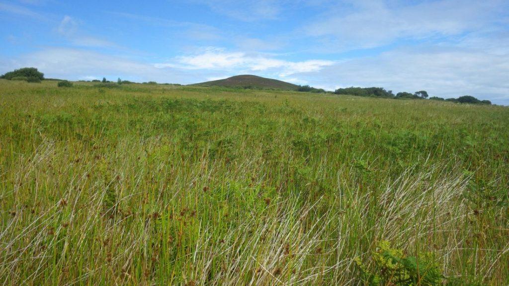 Scotislands Gruinard grass