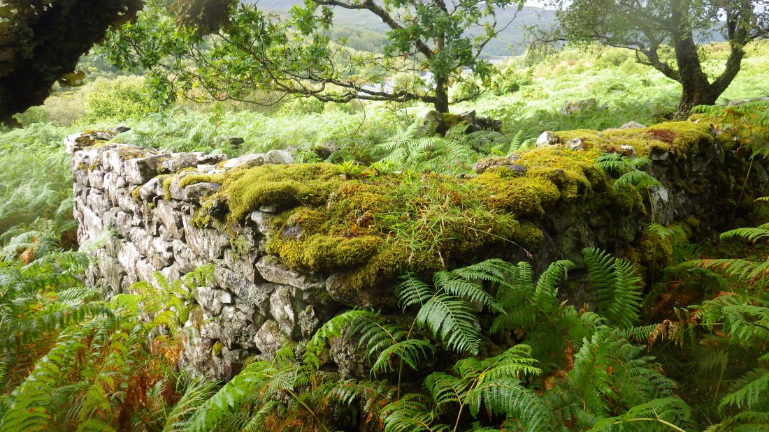 Scotisland Oronsay island