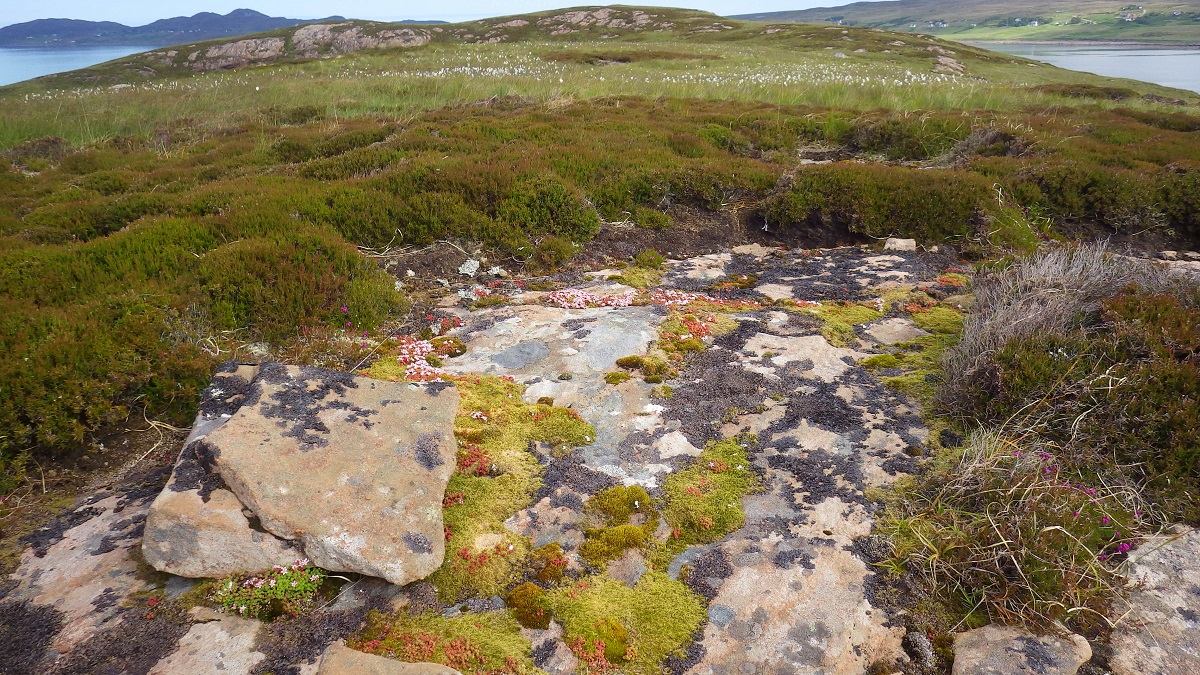 Scotislands sandstone lichen