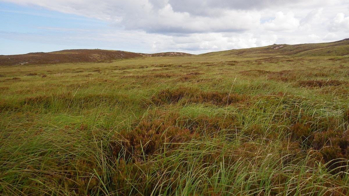 Scotisland Horse island grasslands