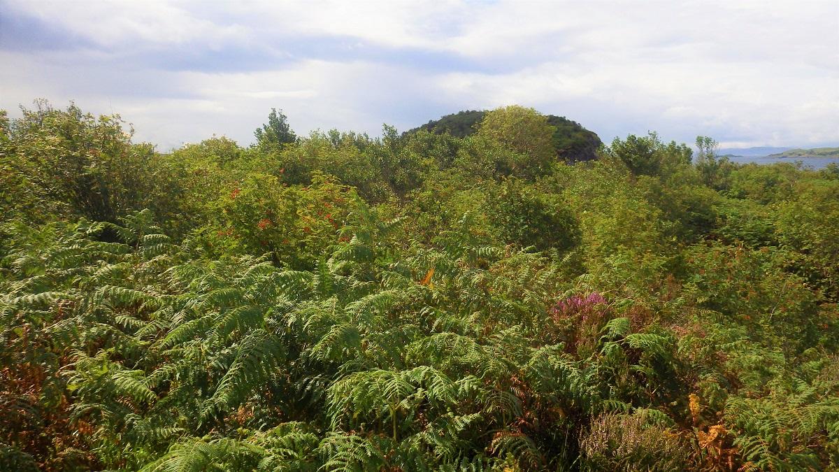 Top of Eilean Dubh Lyne of Lorn