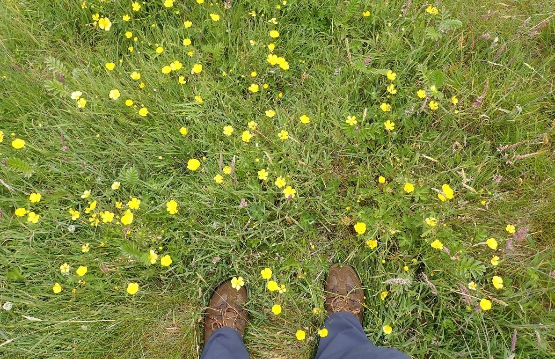 Flowers on Staffa island scotland NTS