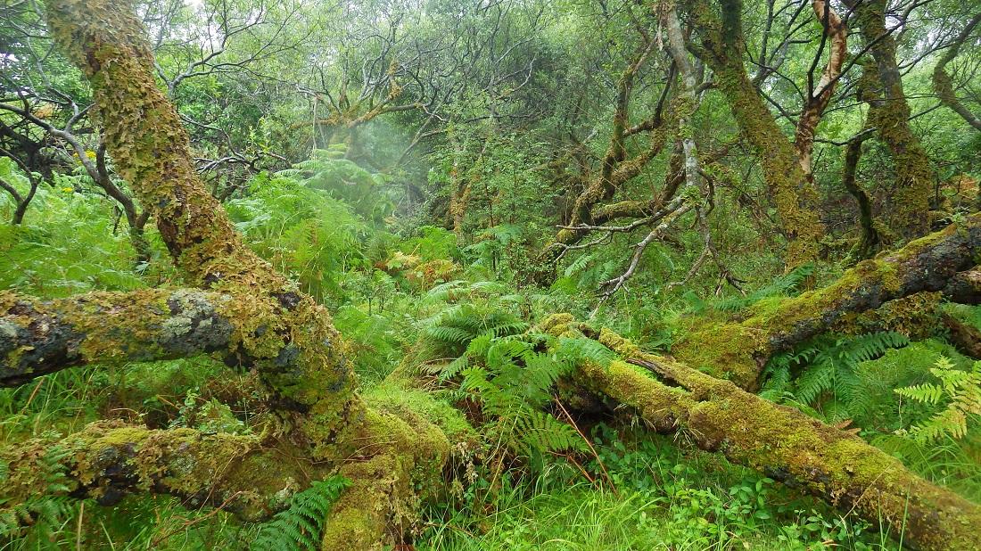 Deep undergrowth Scotislands Eilean Nan Eildean Sunart