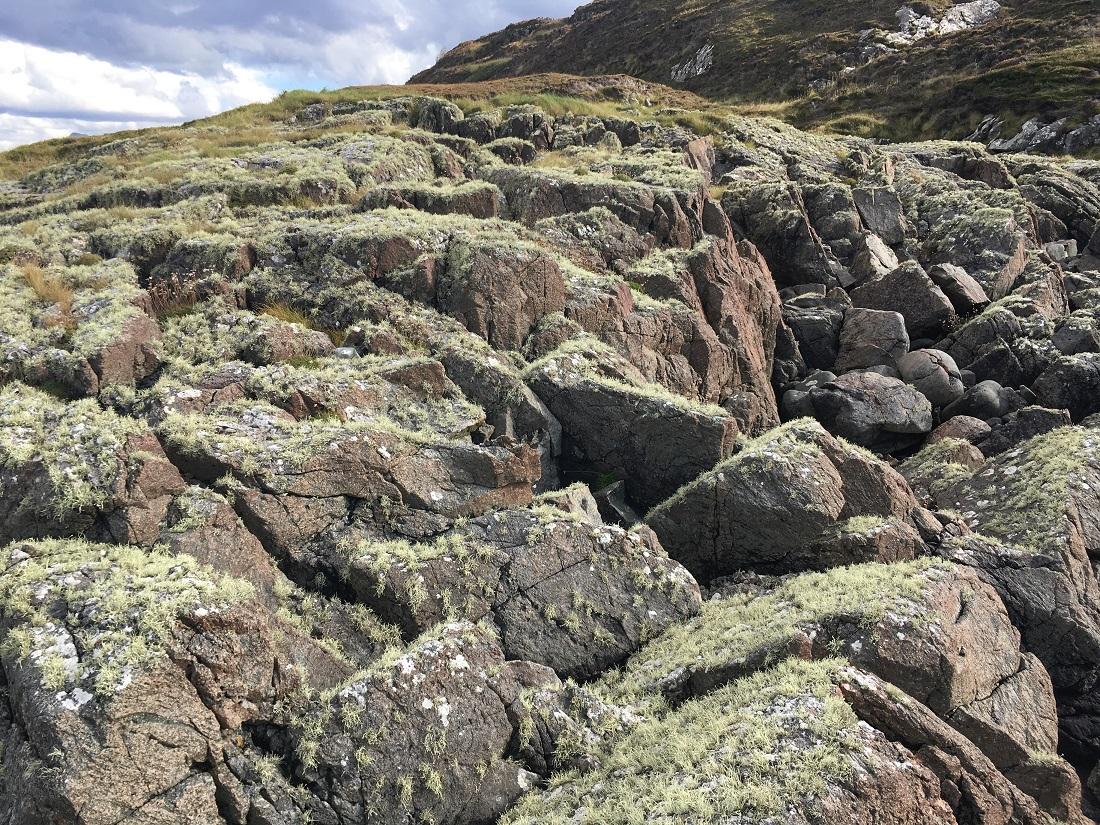 Lichen ihn scottish island soyea lochinver scotislands