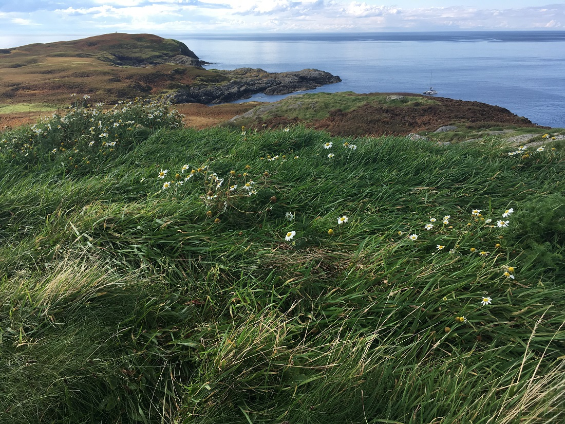 Soyea Scottish Island grass meadow